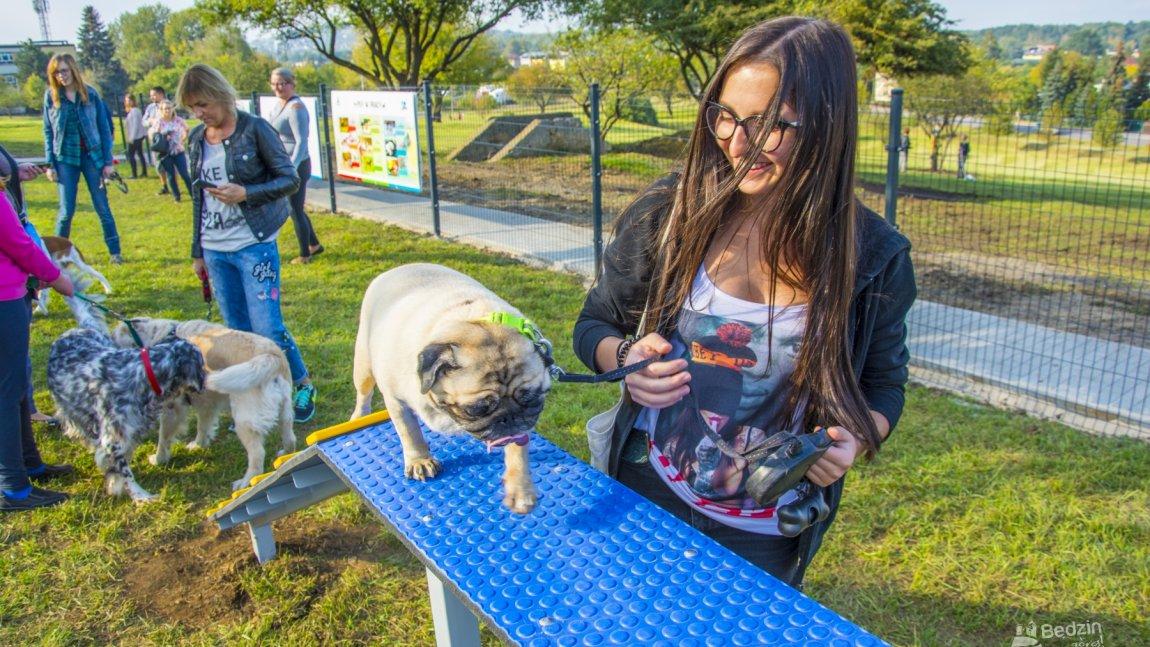 Pies korzysta z urządzeń na strefie