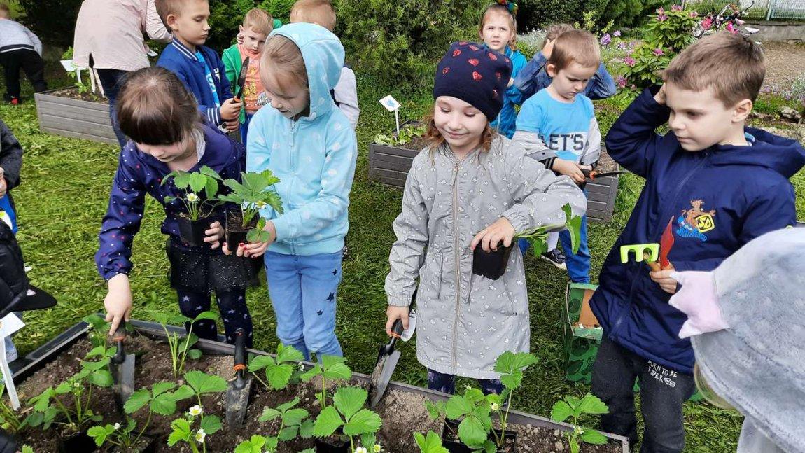 Przedszkolaki podczas sadzenia warzyw i ziół